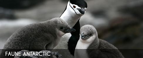 Vignette-faune-antarctic
